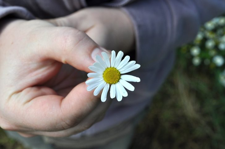 flower-1041044_1280